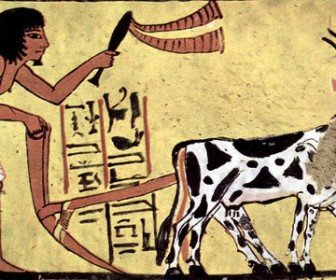 Ancient Egyptians had right to paid sick days